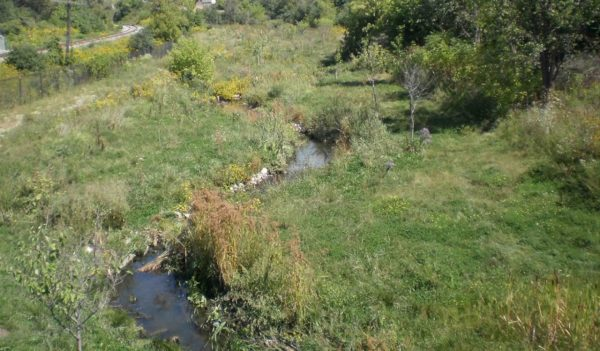 Early riparian vegetation growth along a restored stream.