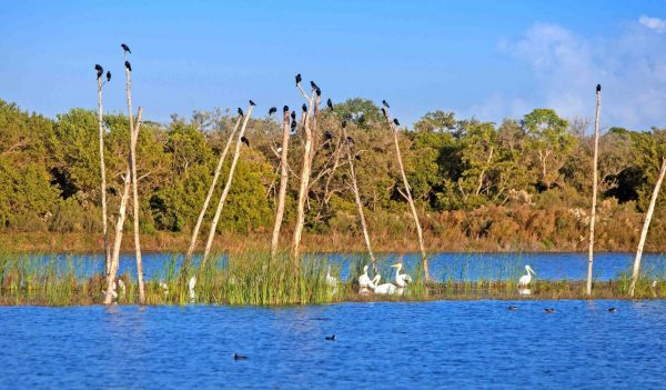 Birds sitting on trees in the lake