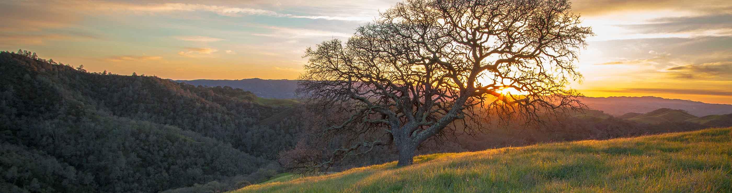 Walnut Creek California